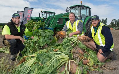 SIAFD volunteers (from left) Henry Willams, Andrew Stewart, and Tim Wilson with the fodder beet crop grown for the machinery demonstrations.